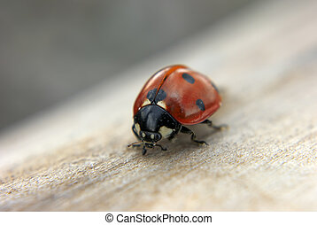 Lady bug at the wood