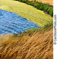 Laguna with seaweed on a background of dry grass