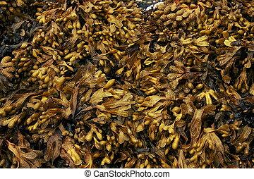 Layer of seaweed