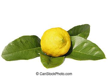Lemon and Leaves