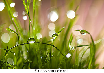 macro leaves of grass with dew