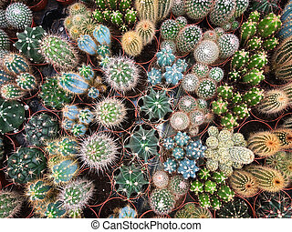 many cacti in plant store / miniature cactus plants -
