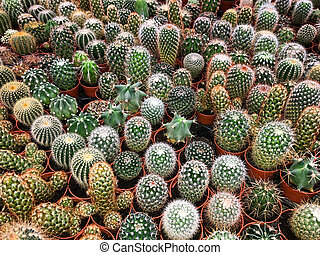 many small cactus plants - potted cacti plant collection