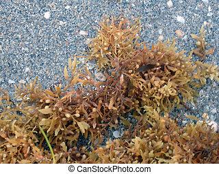 Marine alga's with sand