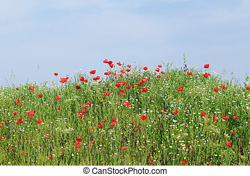 meadow with blue sky green grass and wild flowers