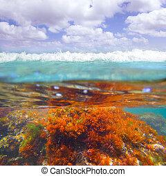 Mediterranean underwater seaweed algae in Denia Javea