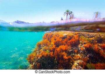 Mediterranean underwater seaweed in Denia Alicante spain