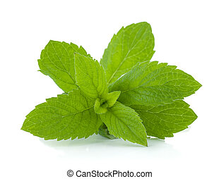 Mint leaves. Isolated on white background