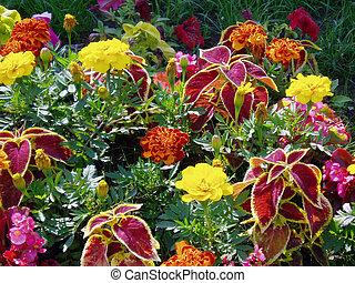 Multi-coloured flowers, plants,