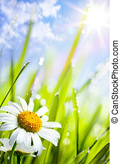 natural summer background; Beautiful daisies flowers growing in grass
