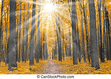 nature. forest with yellow leaves in autumn with sunray