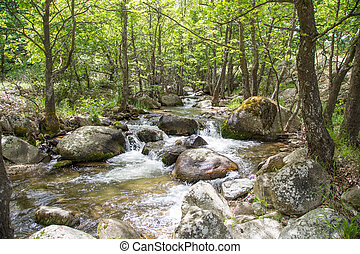 Nature landscape with trees and river