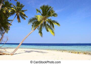 NICE BEACH WITH PALM TREES