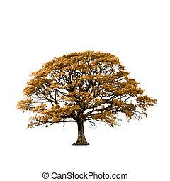 Oak Tree in Autumn Abstract
