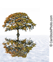Oak Tree in Fall Abstract