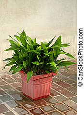 old wall and plant in a pot