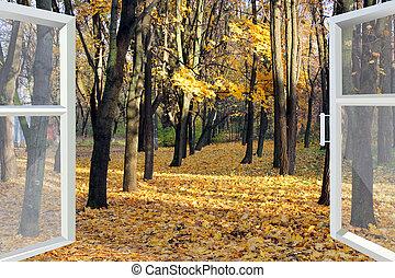 opened window to autumn park
