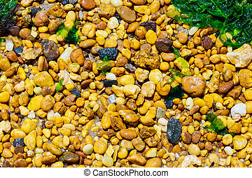 Pebbles and seaweed on beach shore. Abstract background.