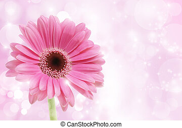 Pink Gerbera flower on a starry background