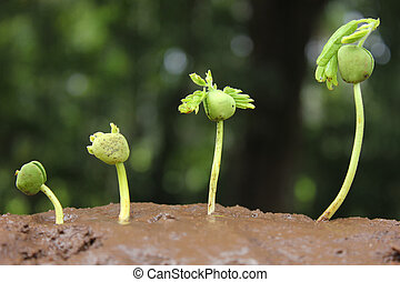 Plant growth-Stages of growing plan