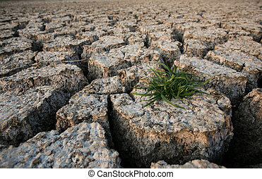 Plant in dried cracked mud