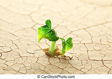 Plant sprouting in the desert