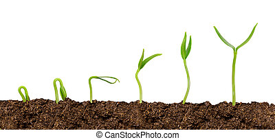 Plants growing from soil-Plant progress isolated over white
