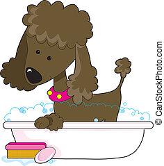 A cute brown poodle in a bath tub