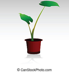 pot flowers vector color illustration