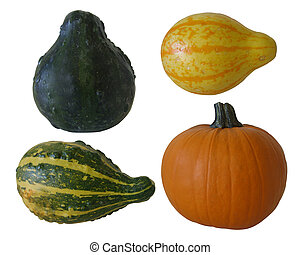 Isolated pumpkin and assorted gourds over white.