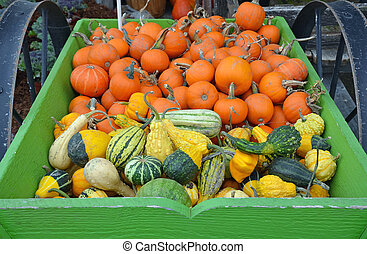 Pumpkins and colorful gourds in green wagon on the farm