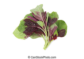 purple and green leaves of the amaranth with white background