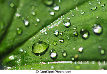 Rain drops on a leaf. Short depth of field