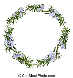 Rosemary herb flowers forming a circular garland isolated over white background.