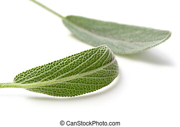 Fresh sage leaves, casting shadow on white. Focus on front leaf.