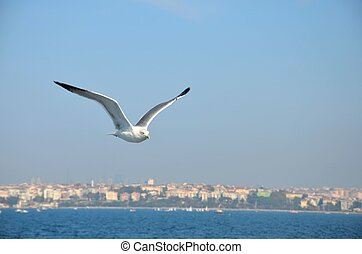 A seagull soars in the sky with the Bosphorus sea underneath and Istanbul skyline behind. Photo taken from a boat in Turkey