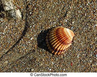 Seashell at the beach in Denia, Spain.