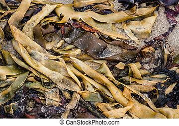 Seaweed on sand beach