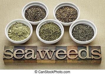 bowls of seaweed diet supplements (bladderwrack, sea lettuce, kelp powder, wakame and Irish moss) with letterpress wood typography