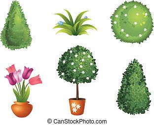 Set of garden plants