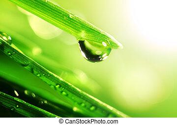 shine water drop
