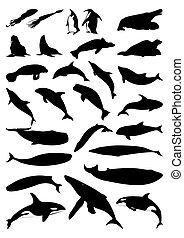 Silhouettes of sea mammals. A vector illustration