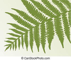 Single fern frond. isolate object