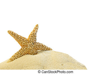 single starfish on a sand hill on a white background
