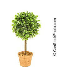 small decorative tree like plant on a white background