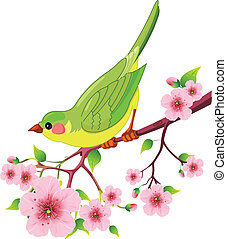 Cute bird sitting on blossom tree branch. Isolated on white background