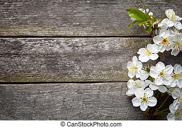 Spring flowers on wood background. Cherry blossom. Top view