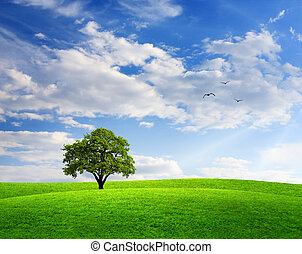 Spring landscape with oak tree and blue sky
