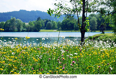 spring meadow with wild flowers and lake
