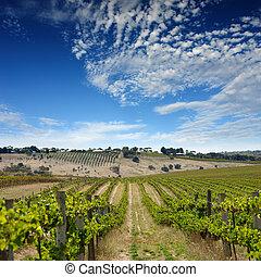 Summer Vineyard Landscape